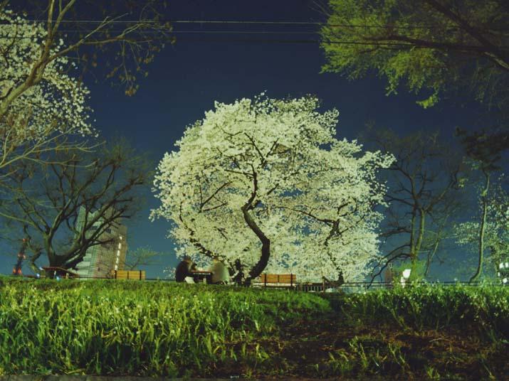 090219_sakura.jpg